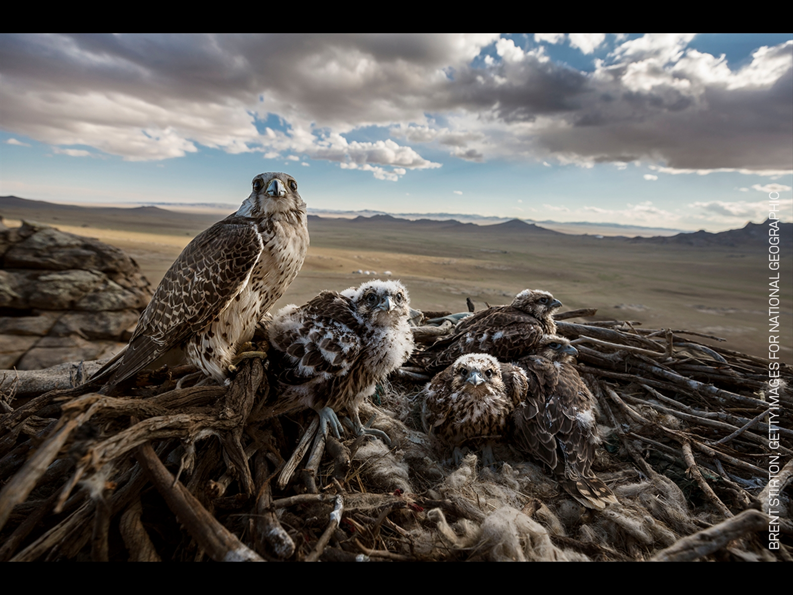 Getty Images for National Geographic Online. Nature, Stories, 1st Prize